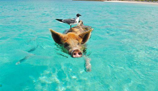 豚足食べてコラーゲン補給♪ができない理由